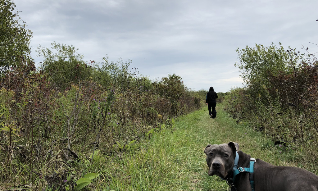 On a walk with Sarah and our dogs…
