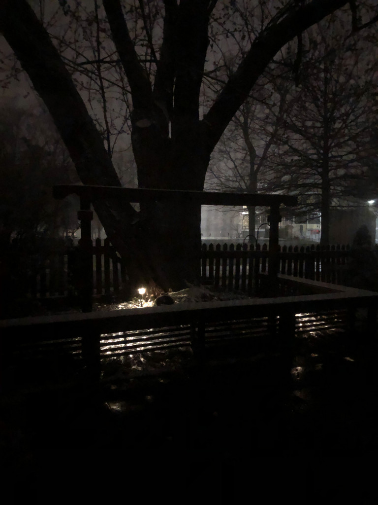 Our backyard at night.