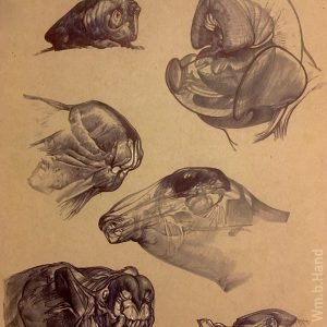 "William Hand's drawing ""Six Creature Heads in Ballpoint"" in the Diner's Club exhibition"