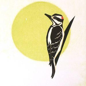 Chris Charles' Hairy Woodpecker Print